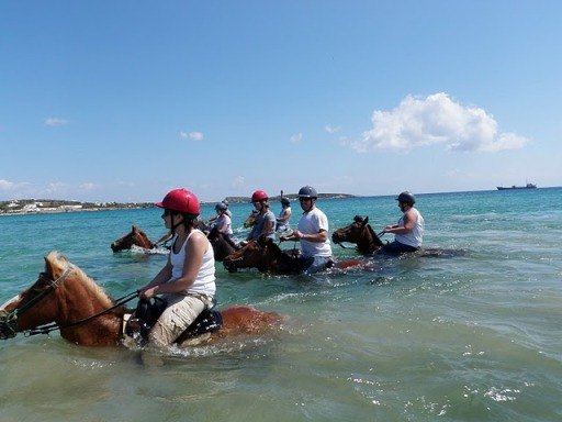 riding horses in the sea